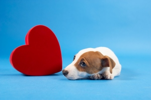 I don't know, we just thought this was cute. Stock photos are hard. (Thinkstock)