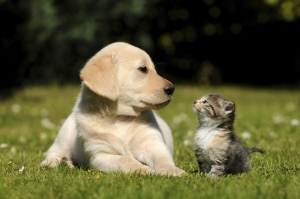 Case in point: You saw these cute pets; you clicked on the post. (Credit: Thinkstock)